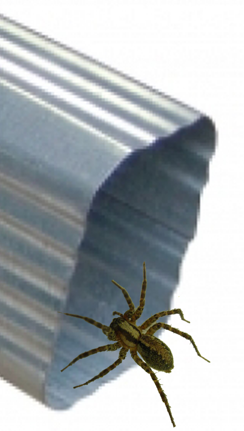 Itsy Bitsy Spider Up The Waterspout