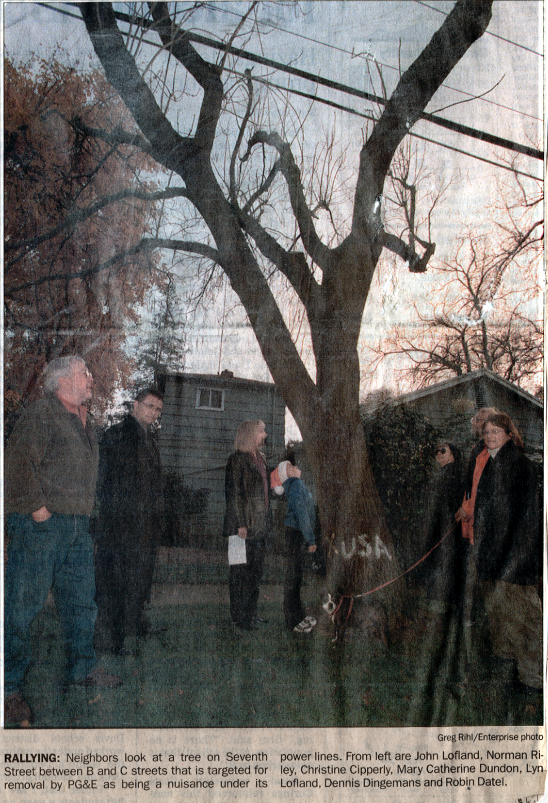The Seventh Street Tree Cutting Stand-Off of 2000-01
