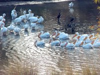 Strange Thanksgiving Bird Visitors