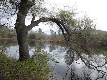 Avery Pond, Mormon Ravine  2/20/19